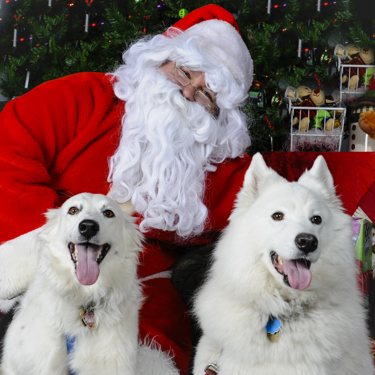 Diane's dogs with Santa at the MSPCA fundraiser
