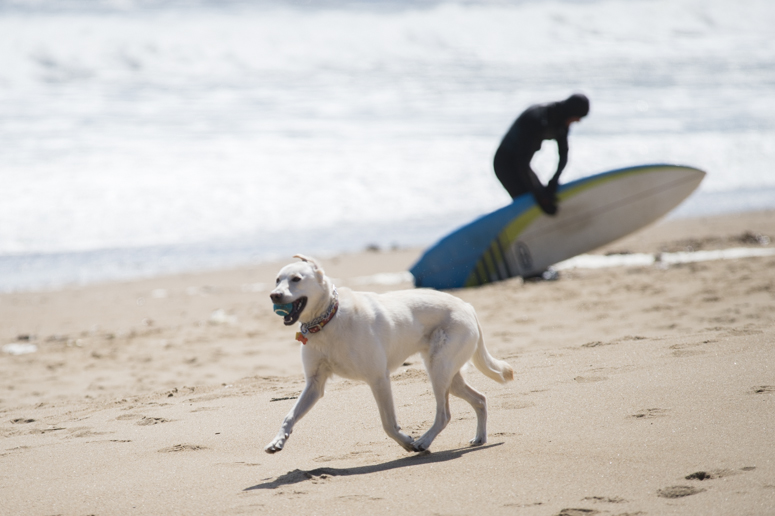 dogs, surfers, plum island-0048