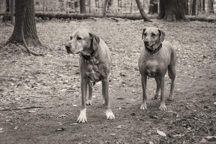 madison and breyer