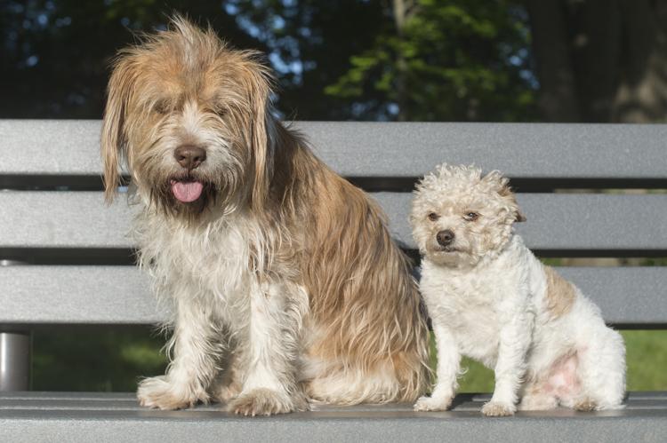 dogs cora prescott bisous boochi-6439