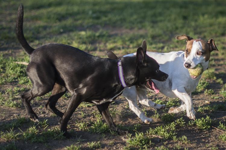 dogs cora prescott bisous boochi-6477