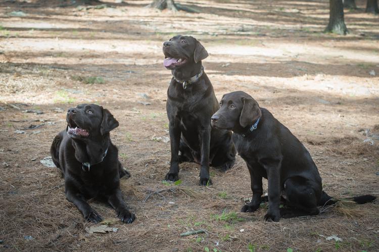 dixie, penzi, and tengo