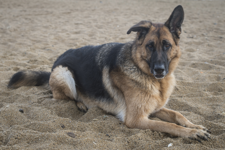 dogs freya onyx elle-6171