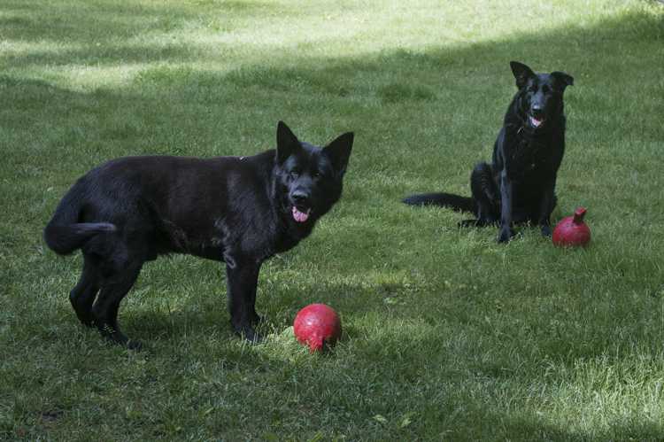 dogs freya onyx elle-6183
