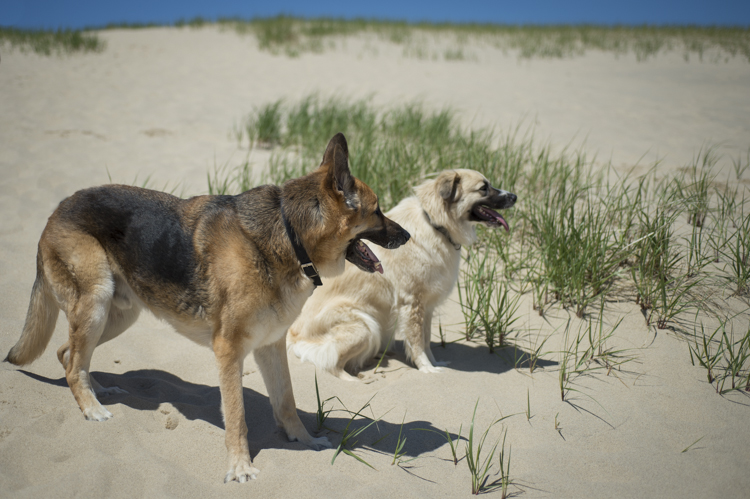 dogs ptown-7676