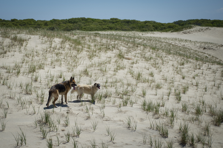 dogs ptown-7704