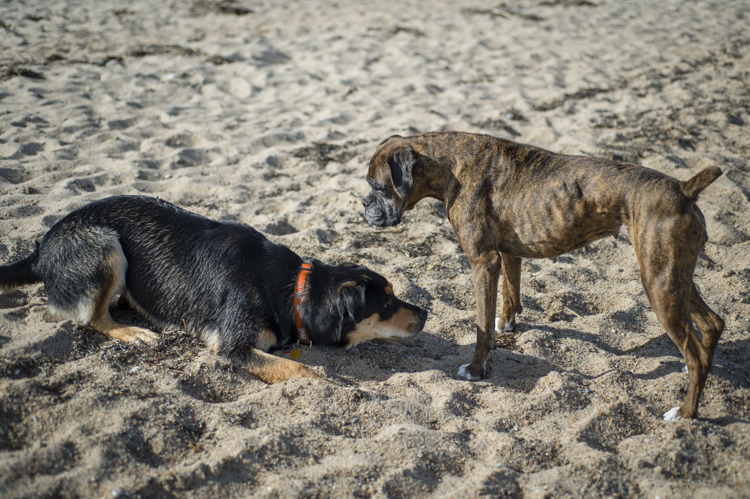 dogs ptown-7818