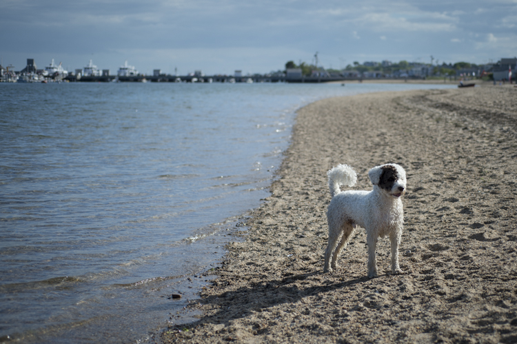 dogs ptown-7824
