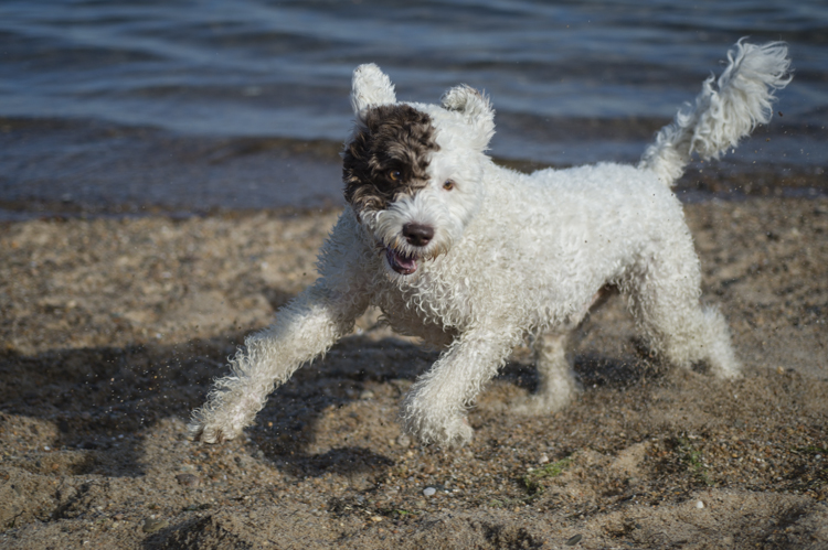 dogs ptown-7840