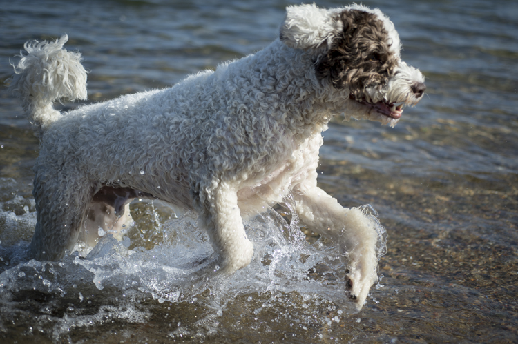 dogs ptown-7848