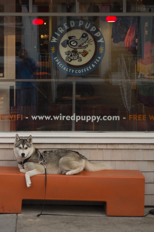 dogs ptown-7882
