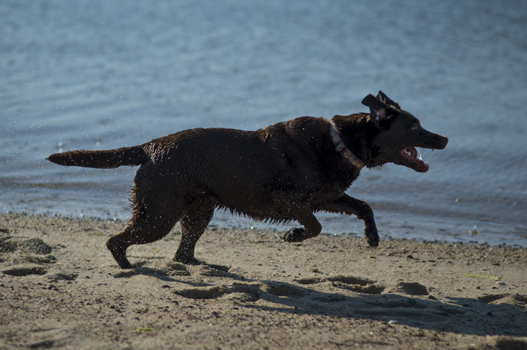 dogs ptown-7934