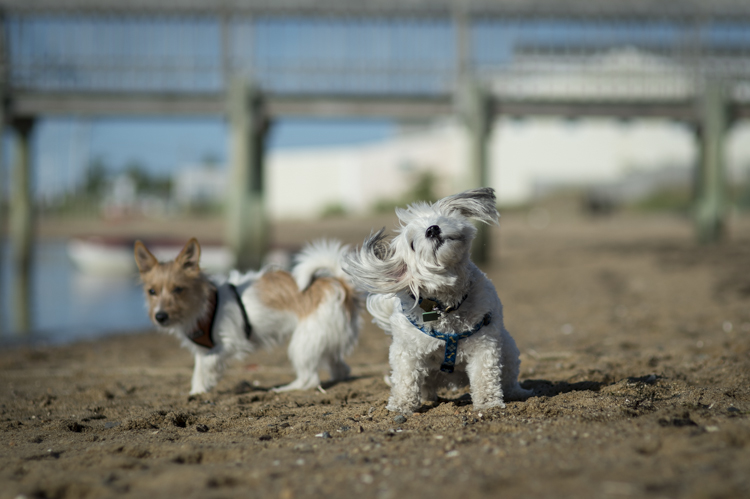 dogs ptown-7975