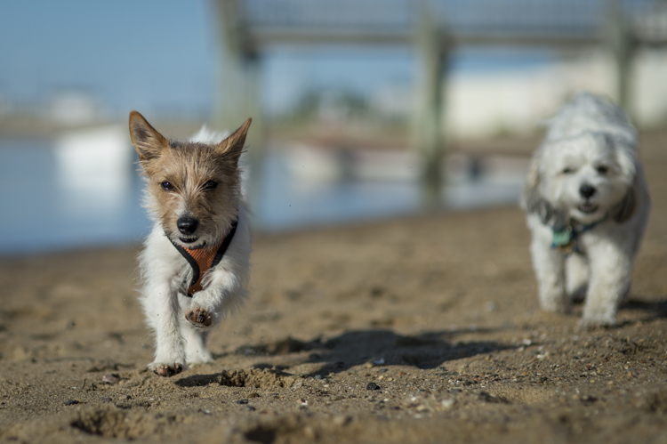 dogs ptown-7976