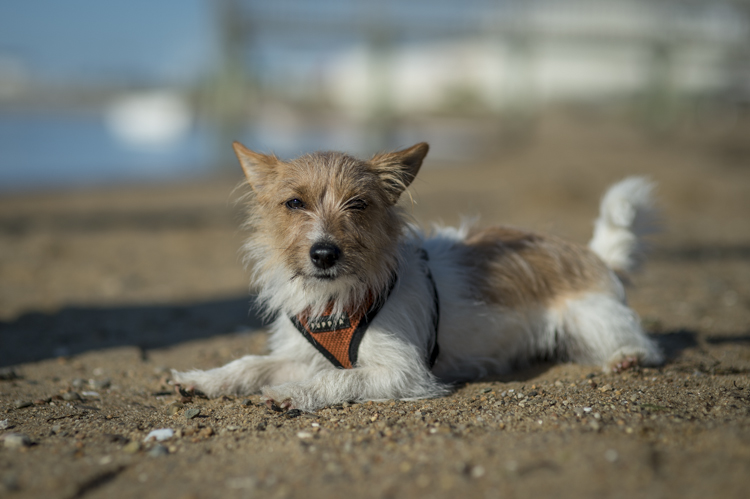 dogs ptown-7979