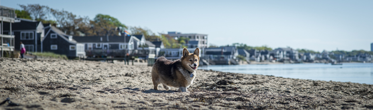 dogs ptown-8011