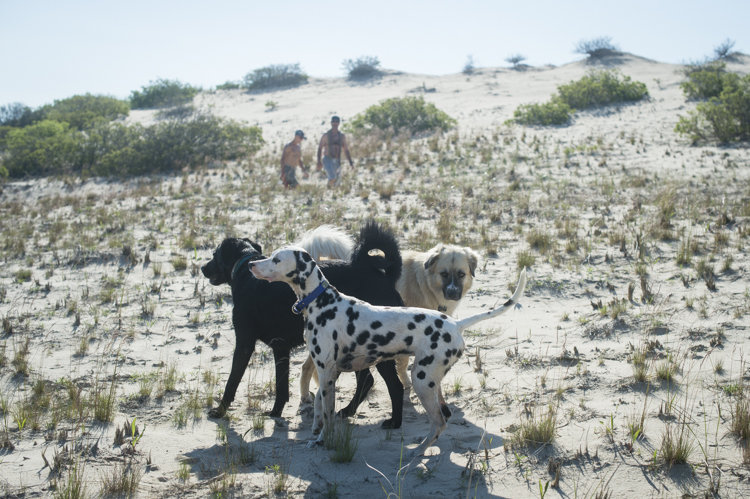 dogs ptown-8194