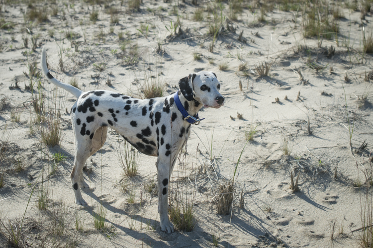 dogs ptown-8205