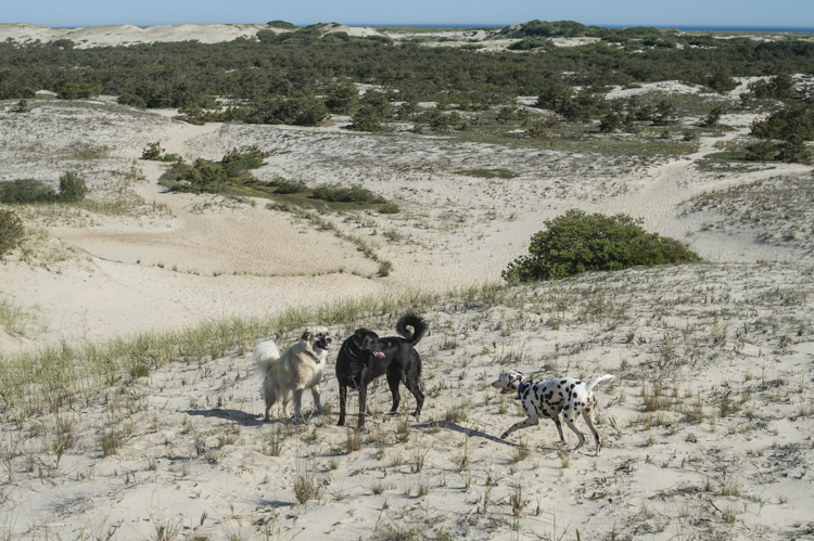 dogs ptown-8214