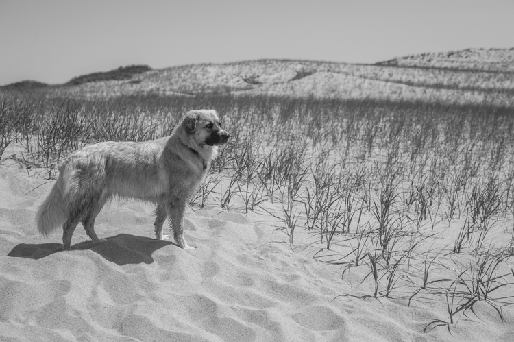 dogs ptown-8266