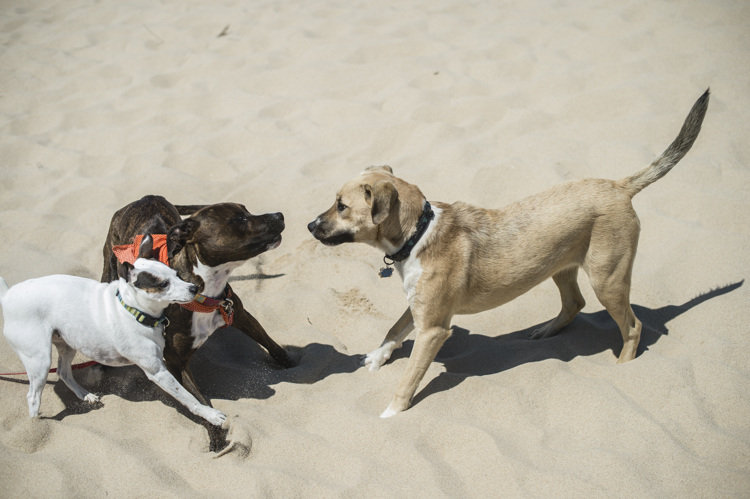 dogs ptown-8285