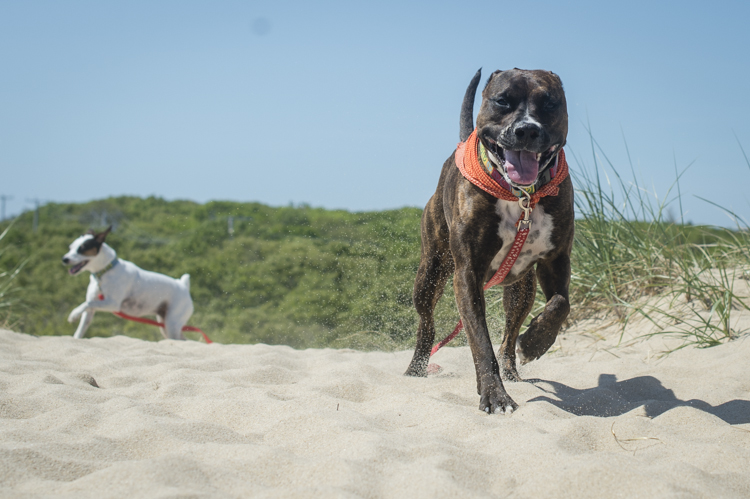 dogs ptown-8286