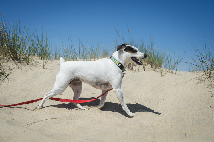 dogs ptown-8295