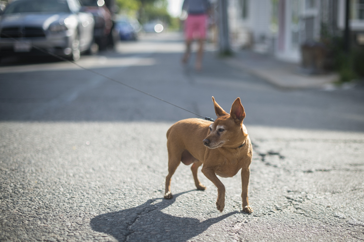 dogs ptown-8463