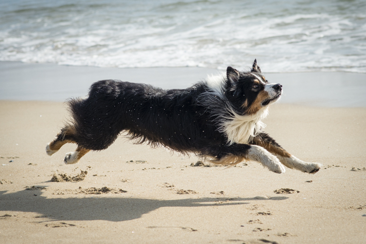 dogs caruso jack-5635