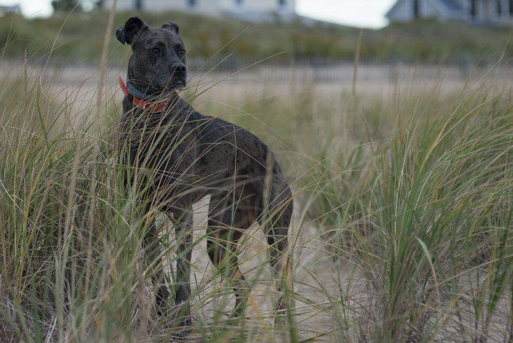 dogs, cricket, ellie-9329