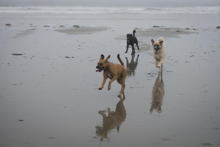 dogs GHB Bodhi-8421