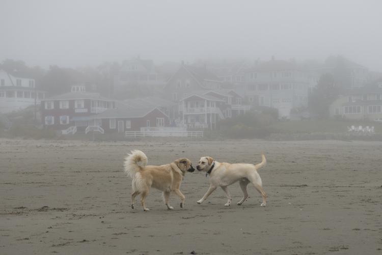 dogs GHB Bodhi-8435