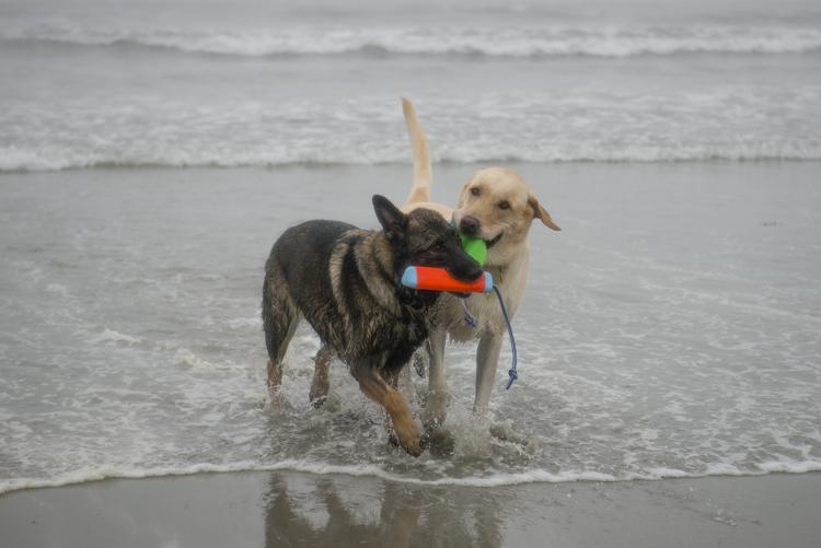 dogs GHB Bodhi-8455