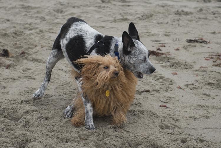 dogs GHB Bodhi-8539