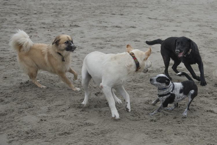 dogs GHB Bodhi-8549