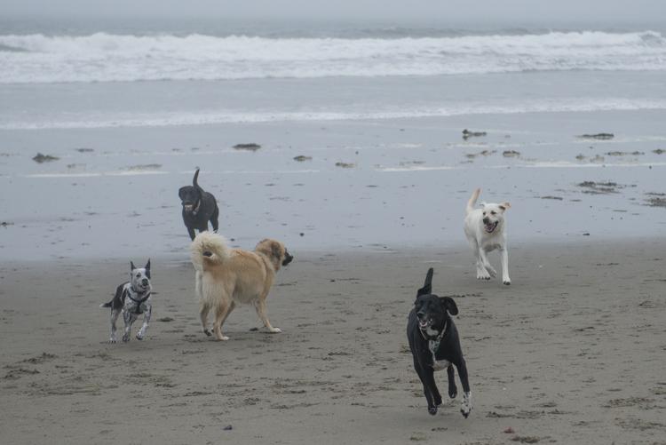 dogs GHB Bodhi-8556