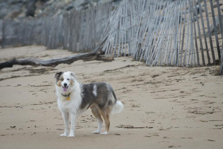 dogs pebbles lulu-8036