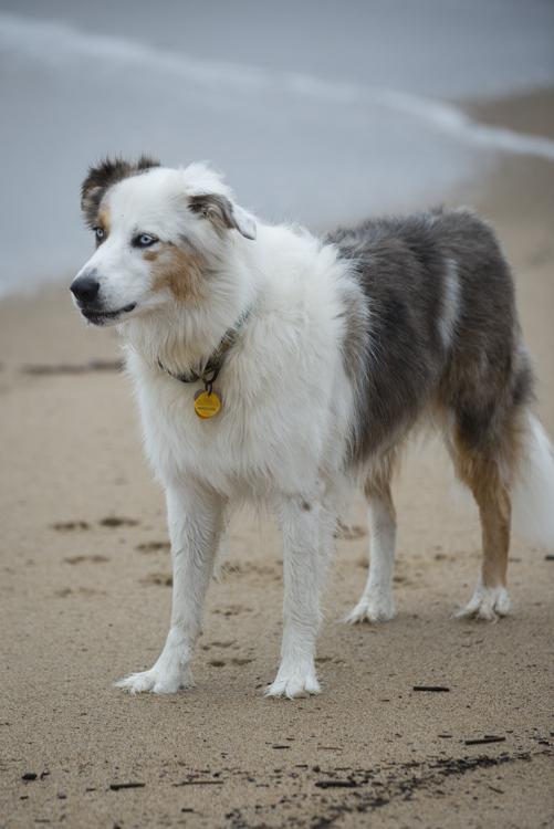 dogs pebbles lulu-8039