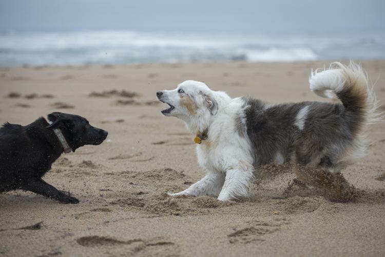 dogs pebbles lulu-8050