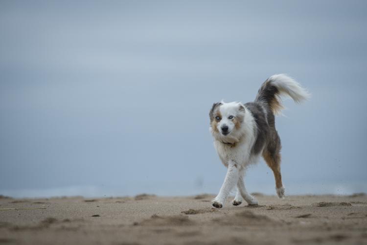 dogs pebbles lulu-8066