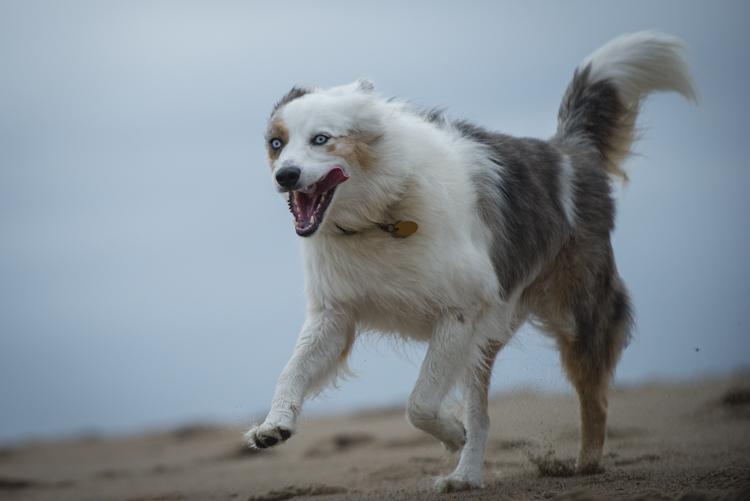 dogs pebbles lulu-8079