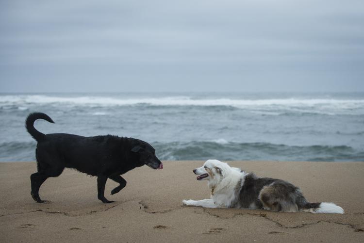 dogs pebbles lulu-8097