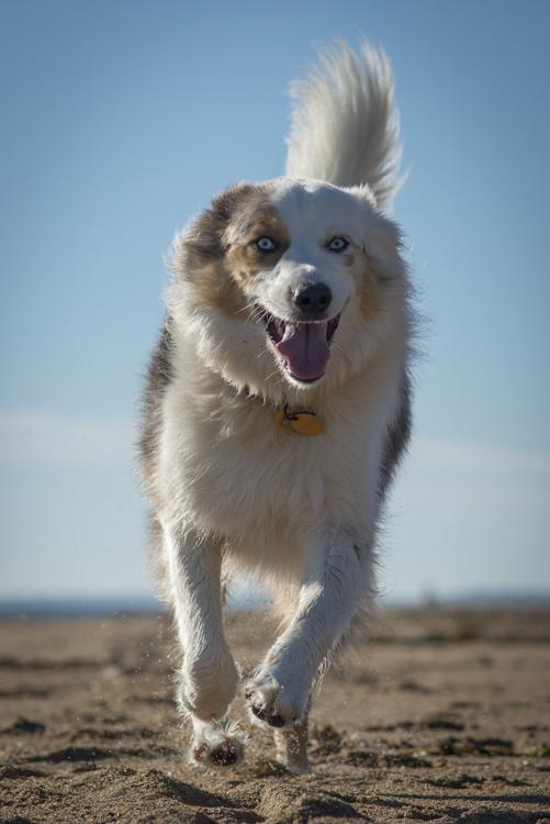 dogs sadie baxter casey hans-8634