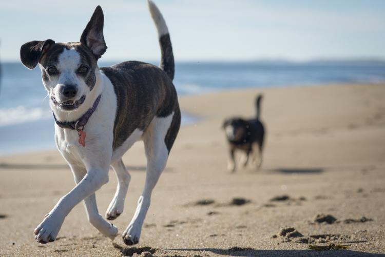dogs sadie baxter casey hans-8651