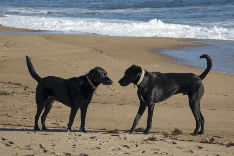 dogs sadie baxter casey hans-8652