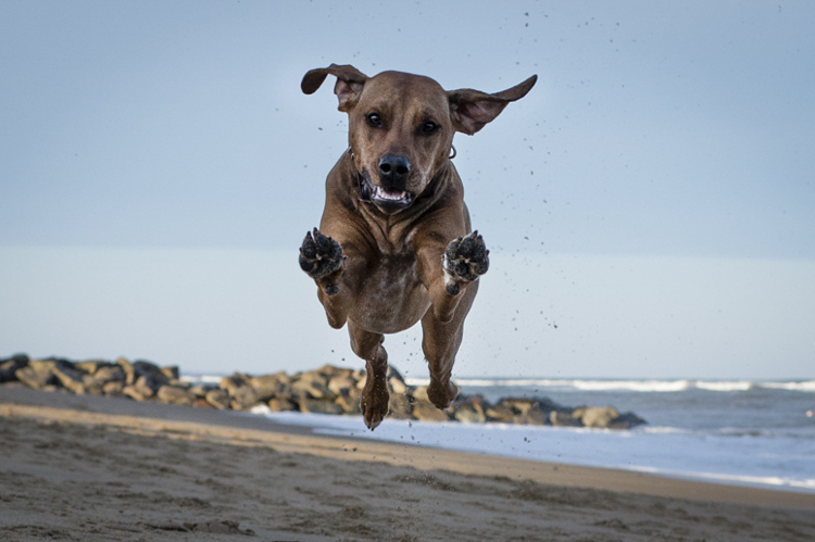 I remember...being amazed at how fast a Vizsla is...