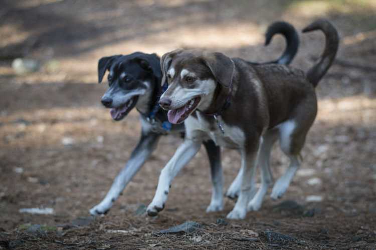 I remember...being so happy that I took this photo of these littermates in lockstep...my favorite dog photo of the year...