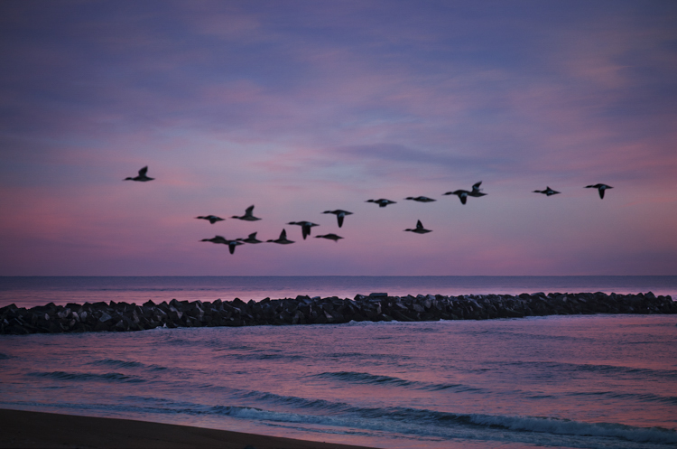 montage plum island sunrise geese