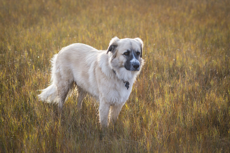I remember...Pepper surrounded by fall colors in the marsh...I never knew I could love a dog this much...