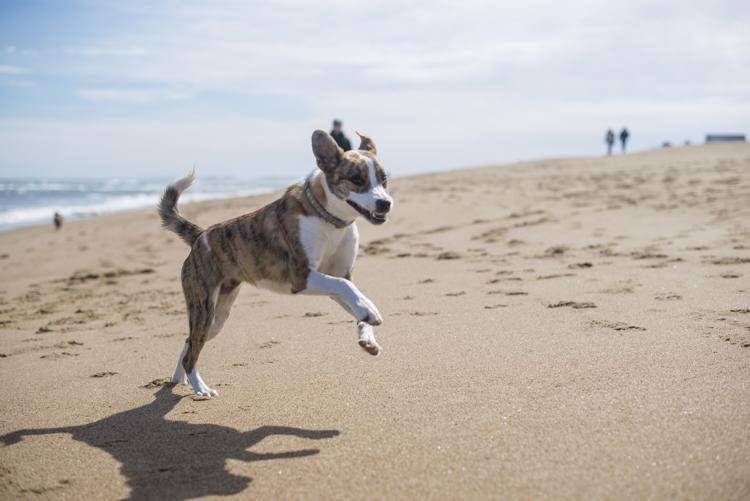 dogs, brian, delilah, tengo-3732